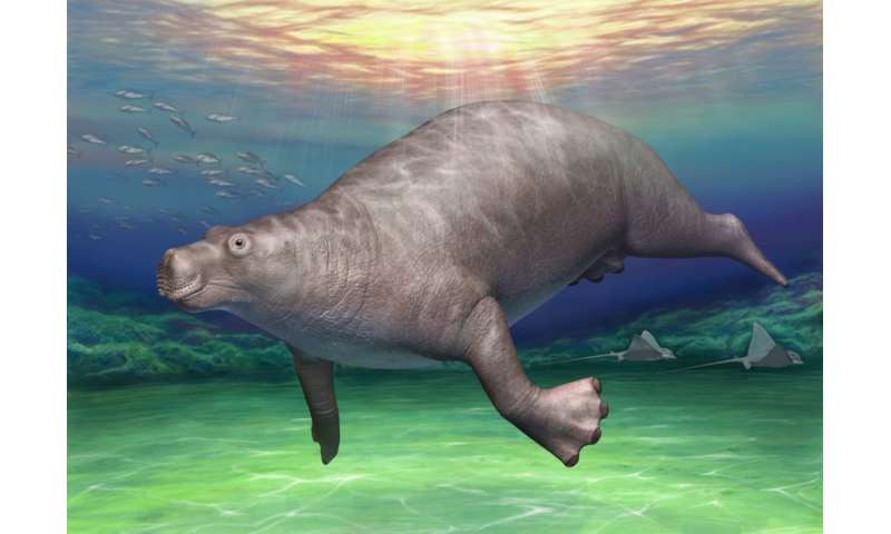 Nearly forgotten 'dinosaur' bone found to belong to ancient hippo-like creature