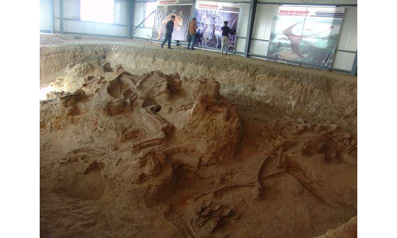 'Amazing Dragon' unearthed in China pushes back date of earliest sauropods in Asia