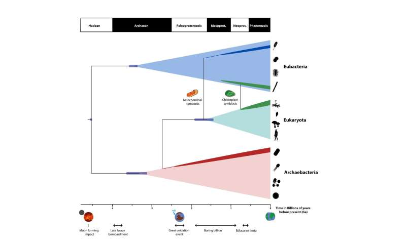 How are hookup methods used to analyze fossil evidence