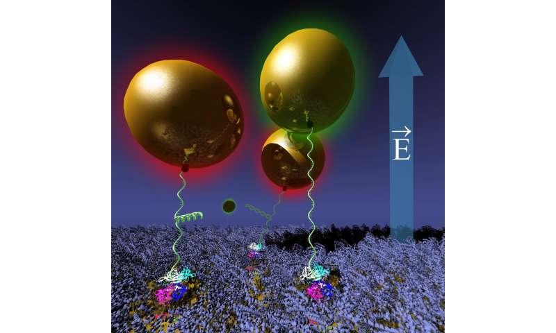 A novel nanoactuator system has been developed