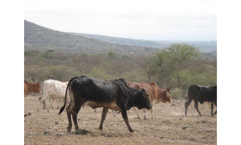 Ancient African herders had lasting ecological impact on grazed lands