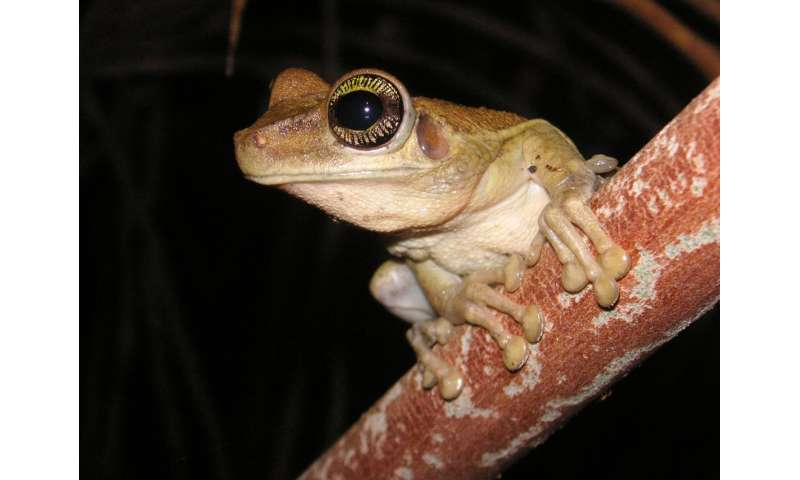 Pond water reveals tropical frogs