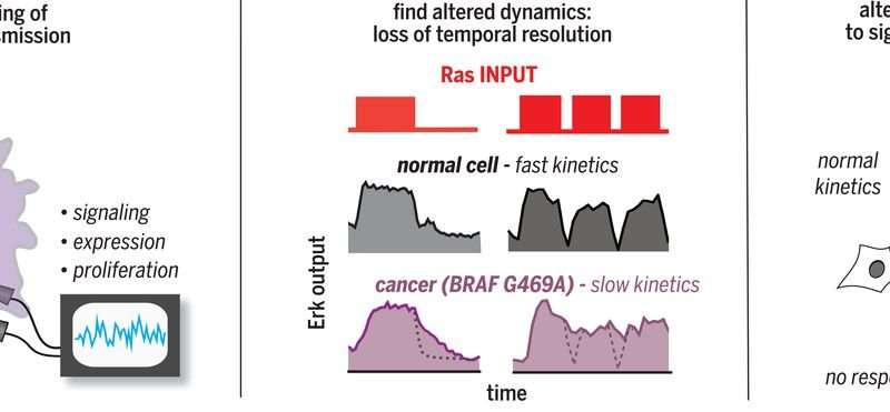 Optogenetic profiling used to identify alterations in Ras signaling dynamics within cancer cells
