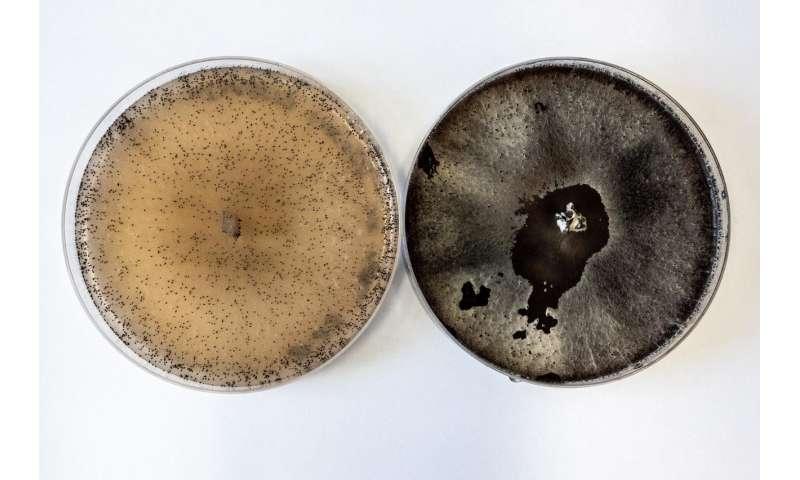 Sexual development in fungi