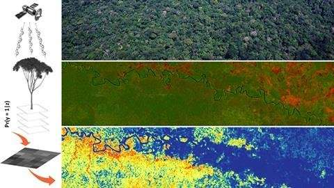 Researchers model tree species distributions in Amazonia