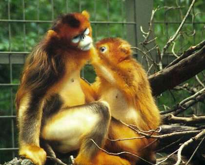 New research warns of primate extinction in China