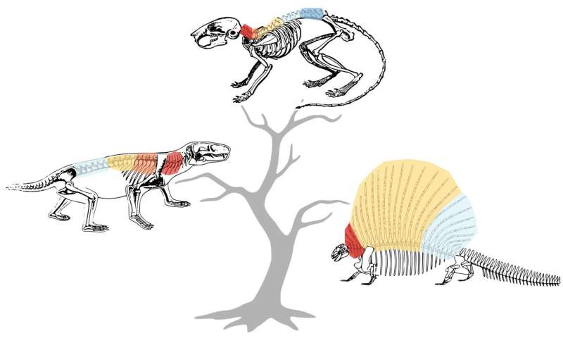 What makes a mammal a mammal? Our spine, say scientists