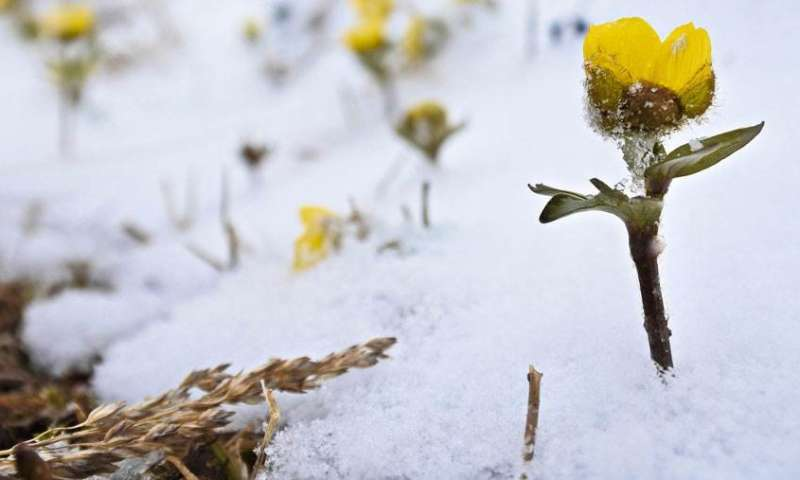 Changes in snow coverage threaten biodiversity of Arctic nature