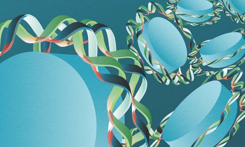 Researchers explain the origin of the mysterious periodicity of the genome