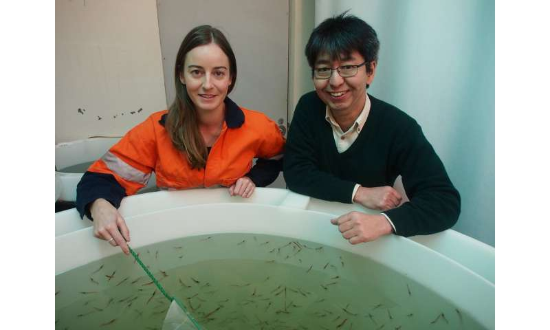 Business as usual for Antarctic krill despite ocean acidification