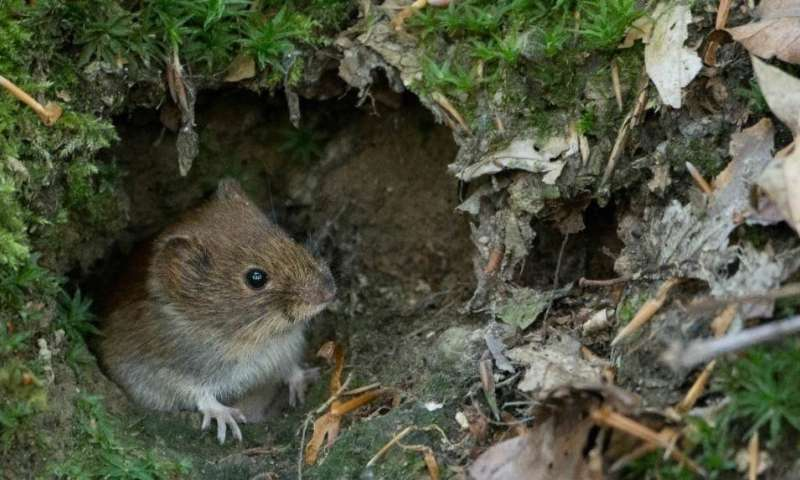 Sex in a world of fear: scared rodents produce more offspring