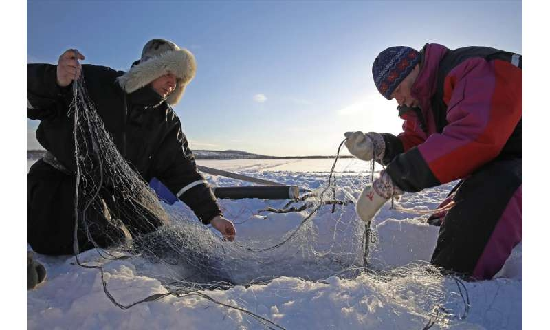 Major gaps remain in how traditional knowledge is used in salmon governance in Norway and Finland
