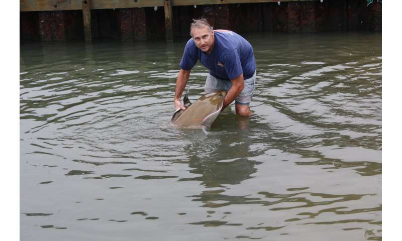 For the first time, biologists track cownose rays to Florida and back