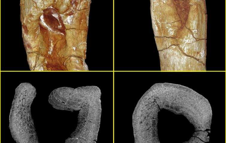 How researchers diagnosed a 200-million-year-old infected predator bite
