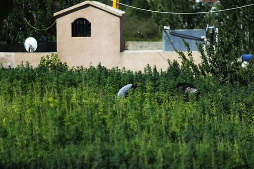 Lebanon's cannabis heartland, Bekaa, hopes for legalization