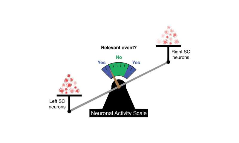 NIH researchers discover neural code that predicts behavior
