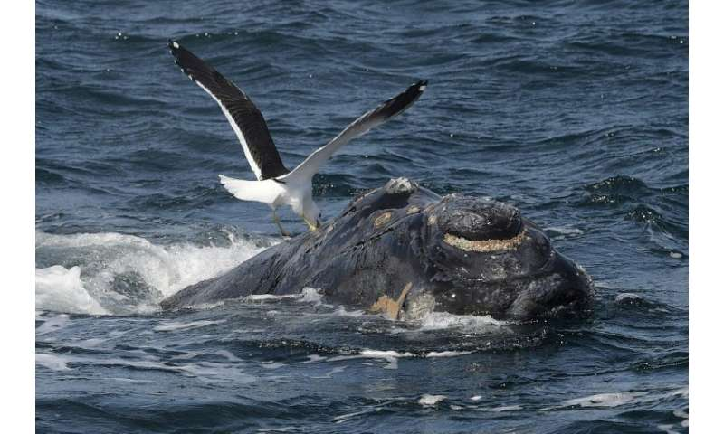 "The International Whale Commission's ""Florianopolis Declaration"" sees whaling as no longer being a necessary economic"