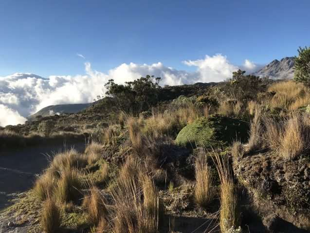 This unique Andean ecosystem is warming almost as fast as the Arctic