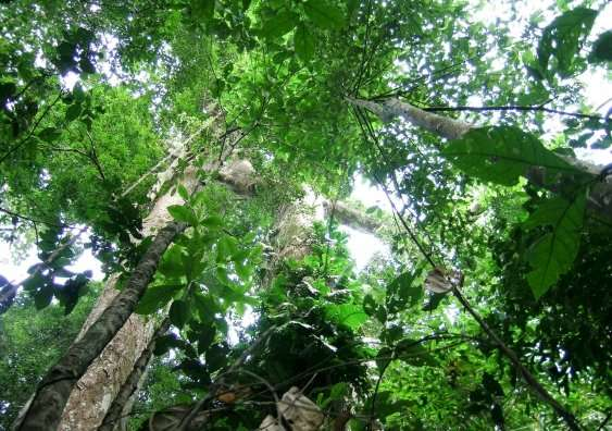 Tropical tree mortality—new study reveals why trees die