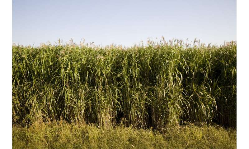 Scientists debunk potential link to crop cold tolerance