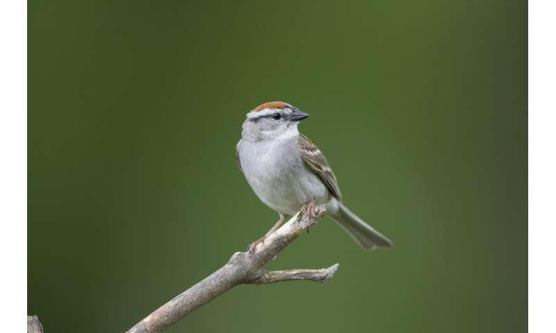 Agricultural & urban habitat drive long-term bird population changes