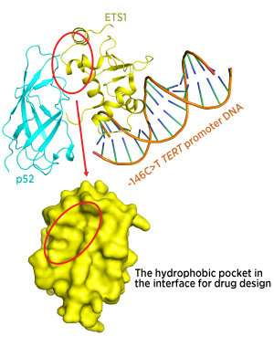 Controlling the gene for the 'immortalizing enzyme'