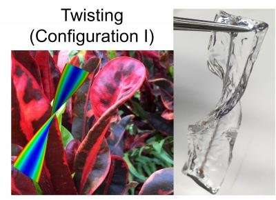 Scientists from CMU and NTU Singapore discover how mechanical strain shapes plants
