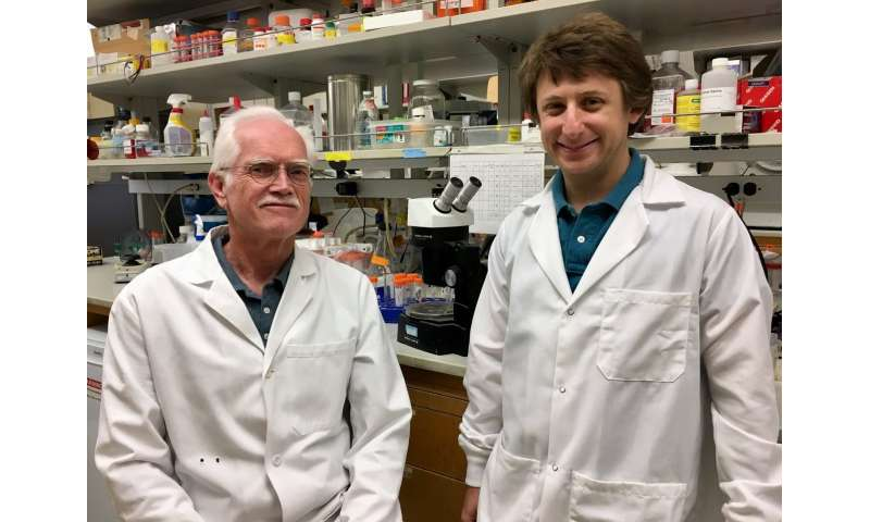 Scientists identify two hormones that burn fat faster, prevent and reverse diabetes in mice