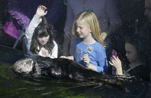 Sea otters 'stuck' despite comeback in California