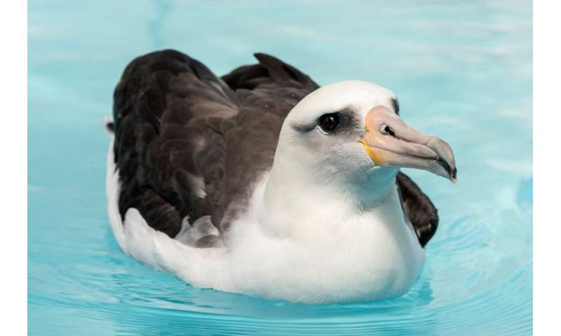 Study reveals changes in seabirds' diets dating back 130 years