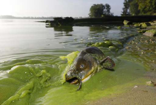 Warming drives spread of toxic algae in US, researchers say