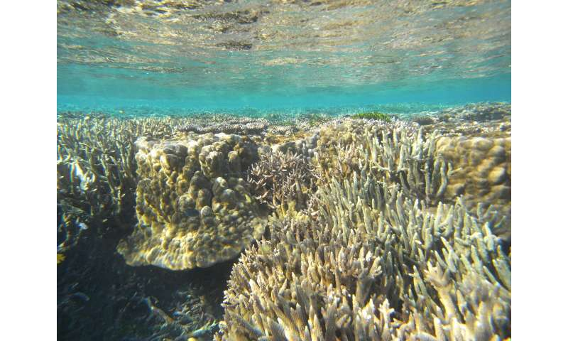 Great Barrier Reef reveals rapid changes of ancient glaciers