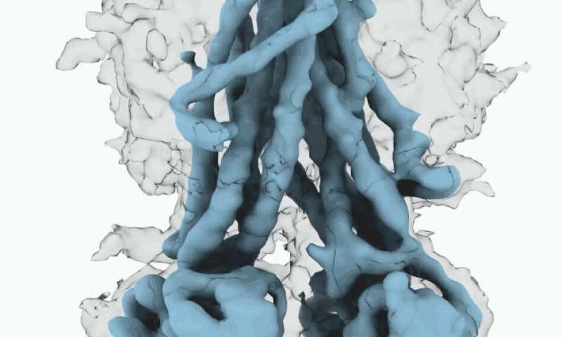 Scientists solve 3-D structure of cystic fibrosis protein in active, inactive states