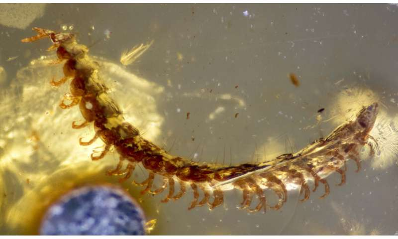 Scientists discover over 450 fossilized millipedes in 100-million-year-old amber