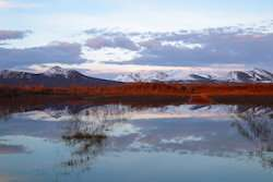 A better understanding of the high levels of mercury pollution in the Arctic tundra
