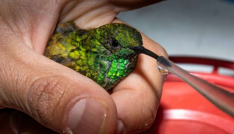 A biologist feeds a hummingbird in Mexico City, where a project launched in 2014 is helping the birds along their long migratory