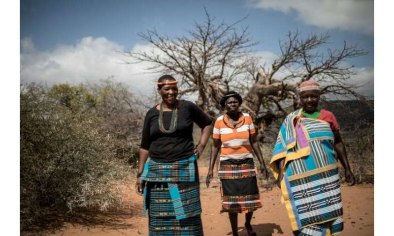 About 1,000 women in the village of Muswodi Dipeni, in the northern province of Limpopo, earn a living by harvesting the furry,