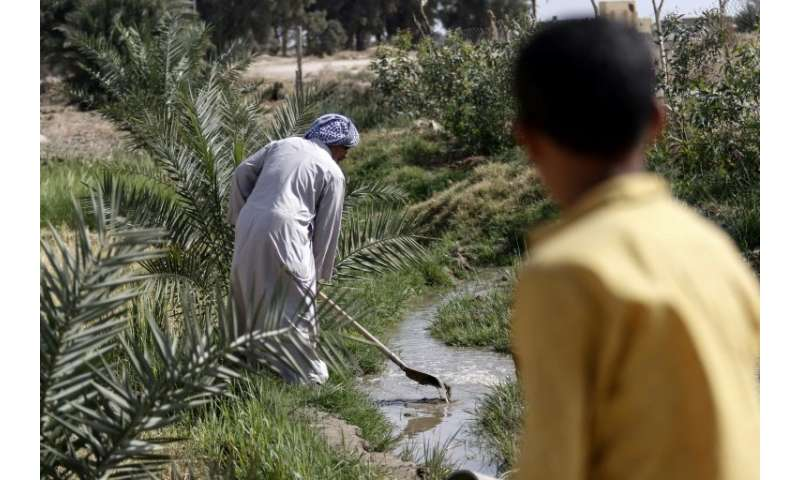 A boy watches as 73-year-old Iraqi farmer Abu Ali uses a shovel to dig in a stream of water in the village of Sayyed Dakhil, to