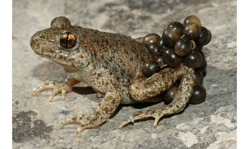 A classifier of frog calls for fighting against climate change