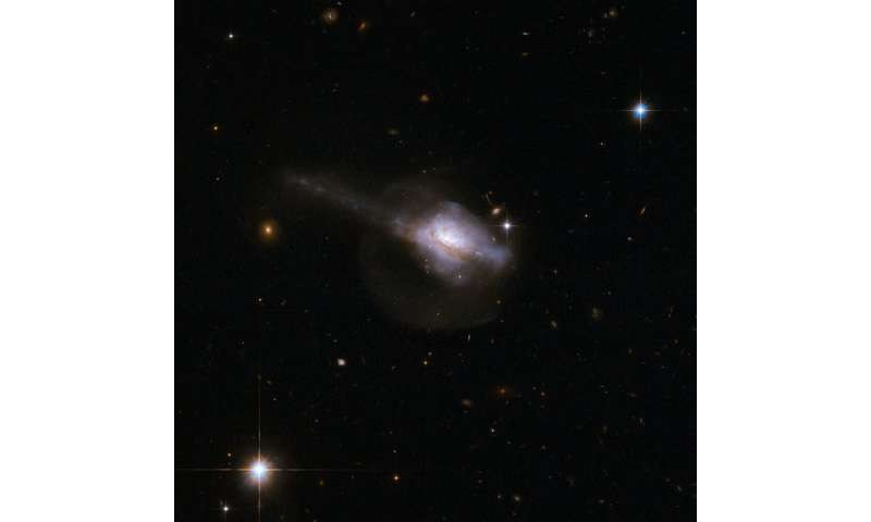 Active galactic nuclei and star formation Activegalact