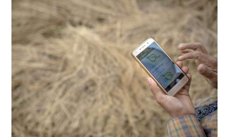 Myanmar farmers going against the grain with apps