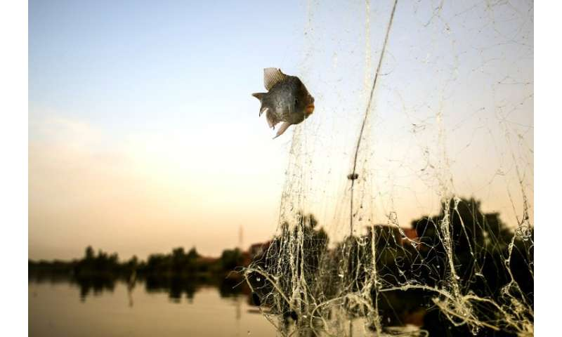 A fish is caught in a net on June 16, 2018, at Egypt's Pharaonic Sea, about 80 kilometres (50 miles) north of Cairo