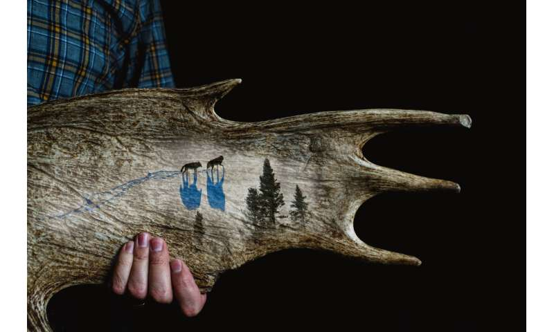 After 60 years, Isle Royale continues world's longest predator-prey study