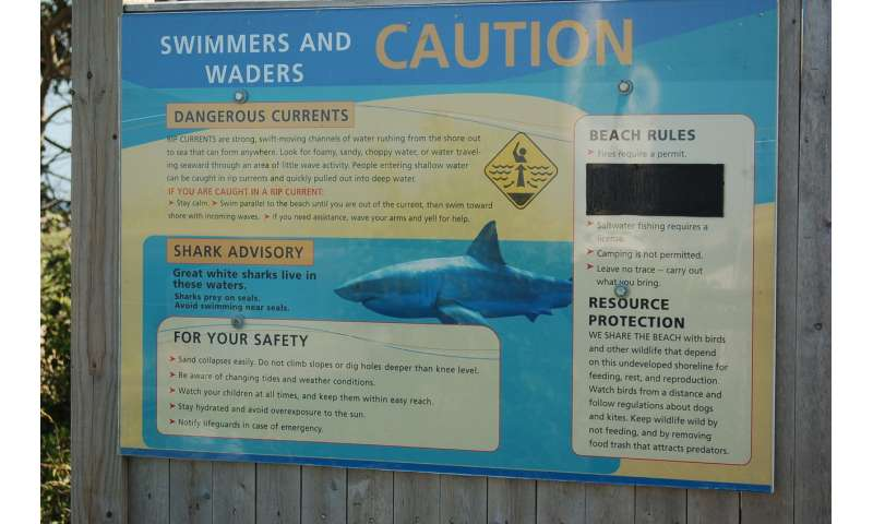 Great white shark attacks seal your idea