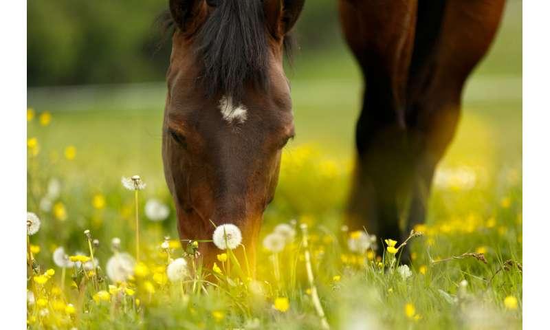 Allergen chip identifies allergies in horses