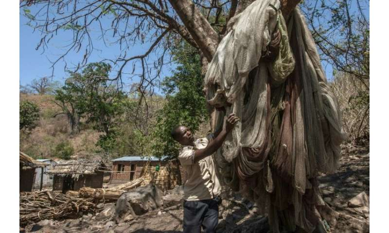 A man on Chisi Island checks his fishing nets which he hung after the lake dried