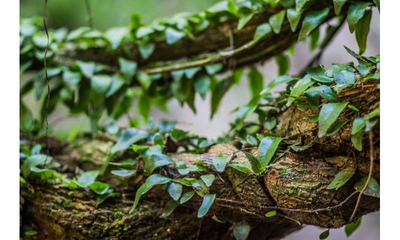 Amazonian psychedelic may ease severe depression, new study shows