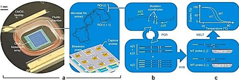 A Miniaturized Semiconductor Biochip to Identify Drug-Resistant Pathogens