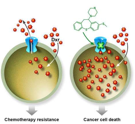A molecule that can improve the efficiency of chemotherapy