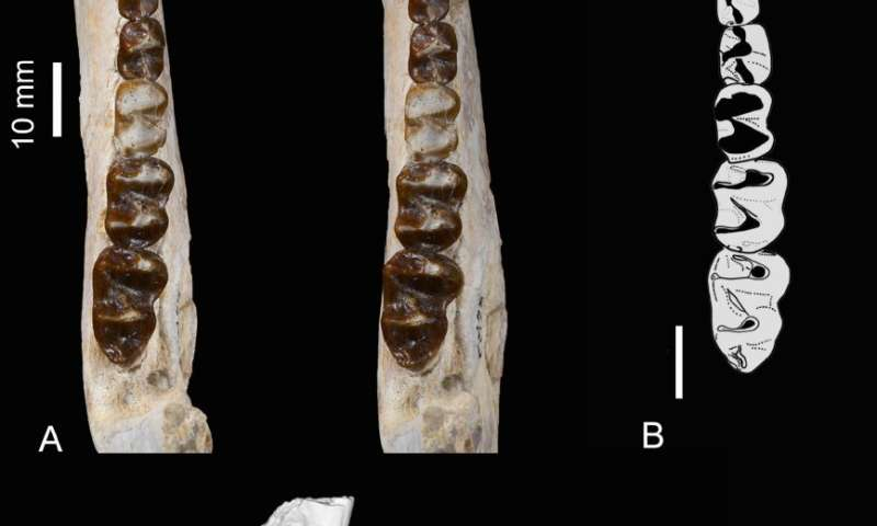 Ancient Moroccan dental remains elucidate history of long-lost African fauna